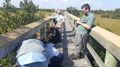Group taking photos or waiting for everyone else to finish taking photos of Clapper Rail